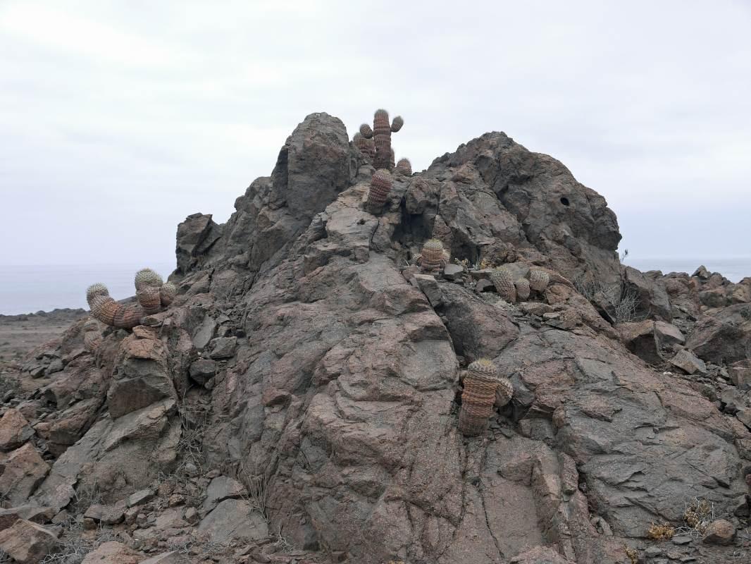 Vandersons - Chile 2- desert, cactuses and ocean
